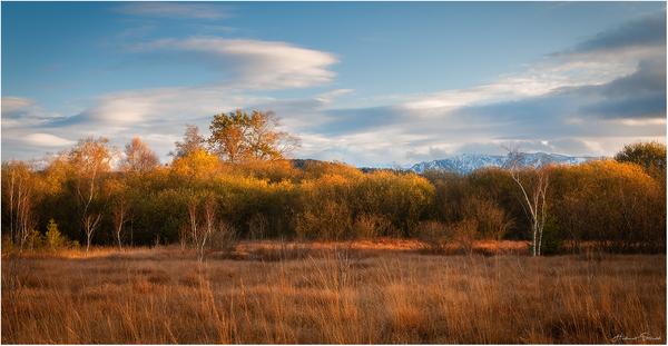 Soft Autumn Sunlight