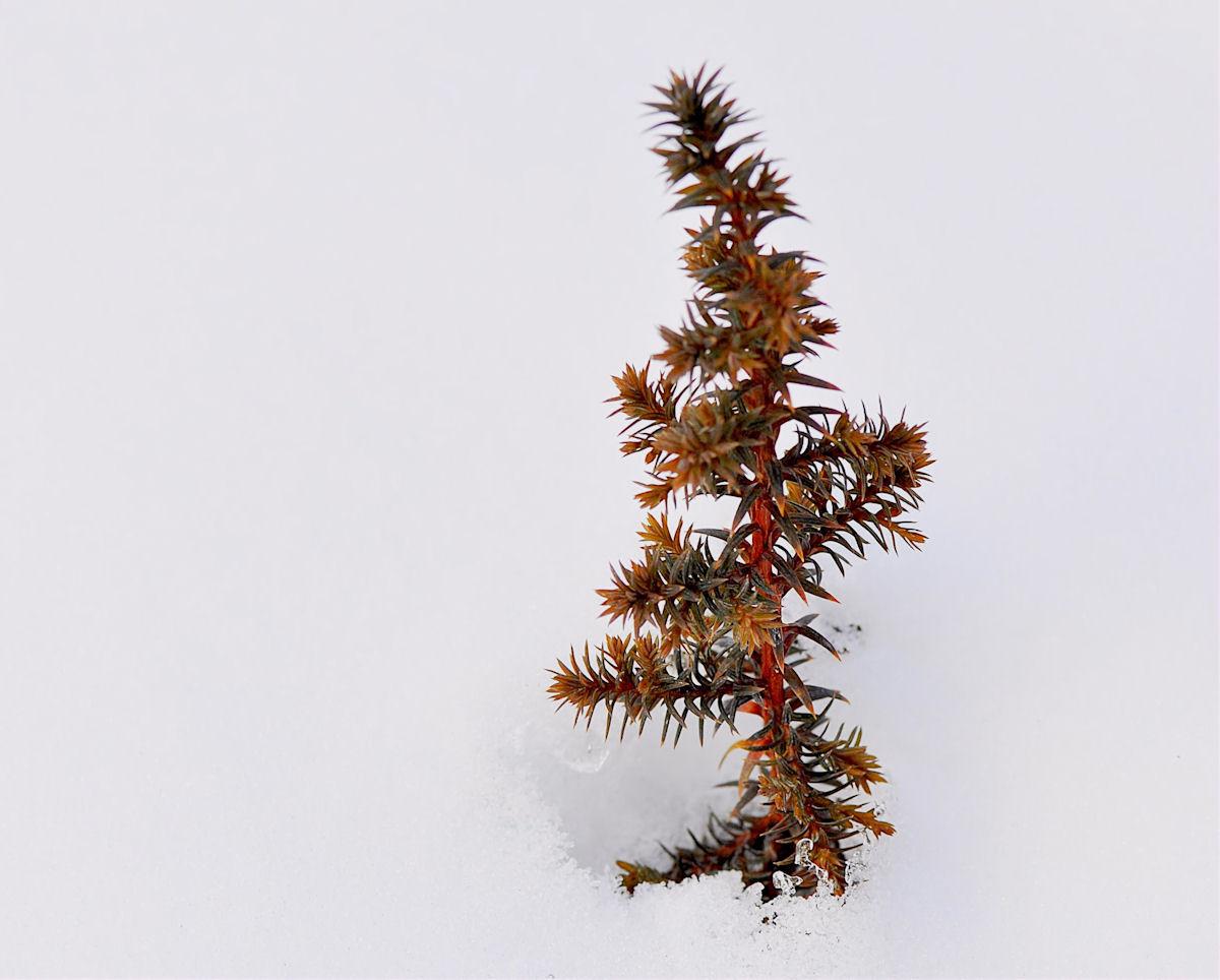Mini Baum