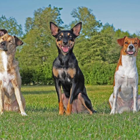 3 Hunde - 3 Charaktere
