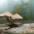 Pilze im nebeligen Wald