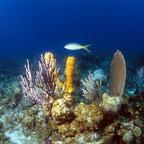 koralle mit Fisch .)