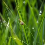 green_snail