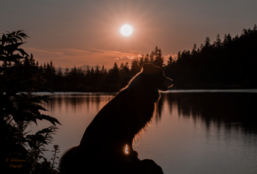 Hailie im Sonnenuntergang am Hebalmsee