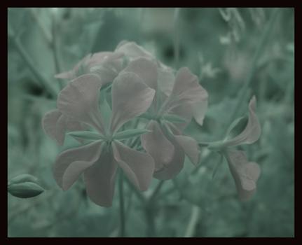 IR Blume