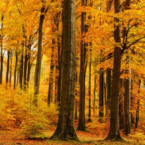 Bunt sind schon dieWälder ...