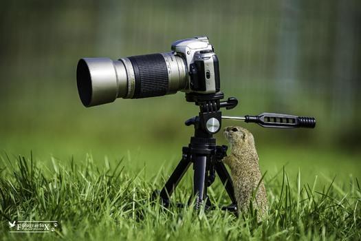 Amateufotograf