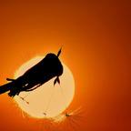 Blick Richtung Sonne