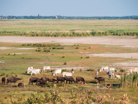 Die Herden