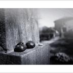 FriedhofDerNamenlosen(1)