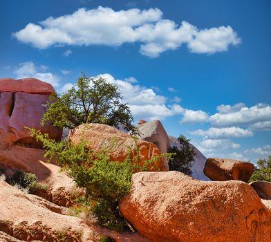 Bemalte Felsen bei Tafraoute (MAR)