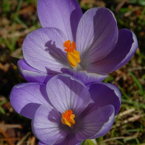War gerade im Garten, endlich Frühling!!! 2