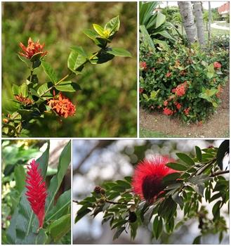 Kuba, Blüten