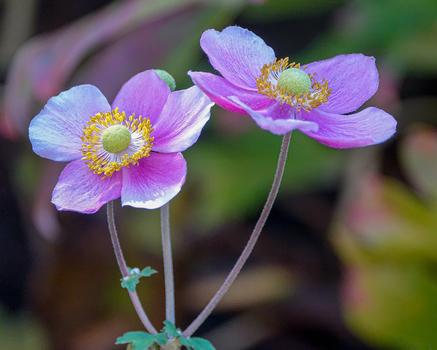 Herbstliche Blüten im Garten