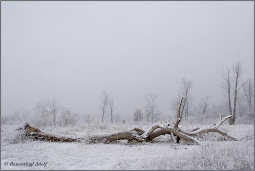Winter in Lobau