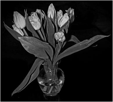 Tulpen (noch einmal)