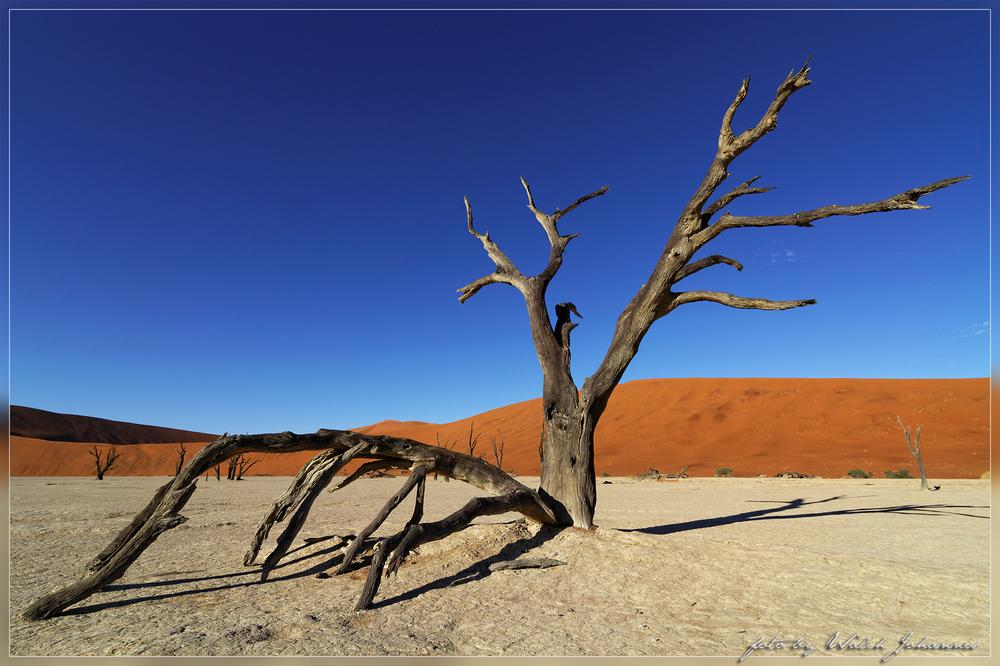 Deadvlei-Baum 2