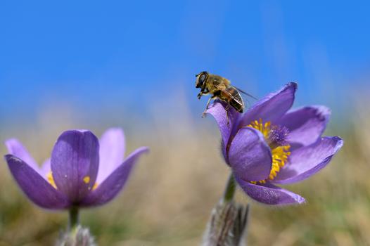 Start in den Frühling