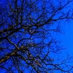 Baum oder Wurzeln ?