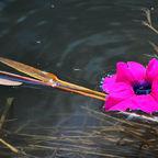 Schwimmende Blumen