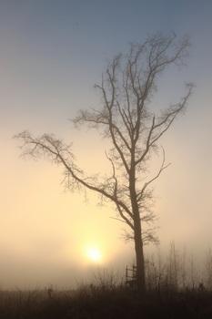 Sonne vs Nebel Nr.3