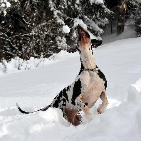 Und noch ein Schneeball :-)!