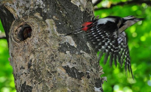Nest - Flucht