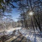 Im Wienerwald