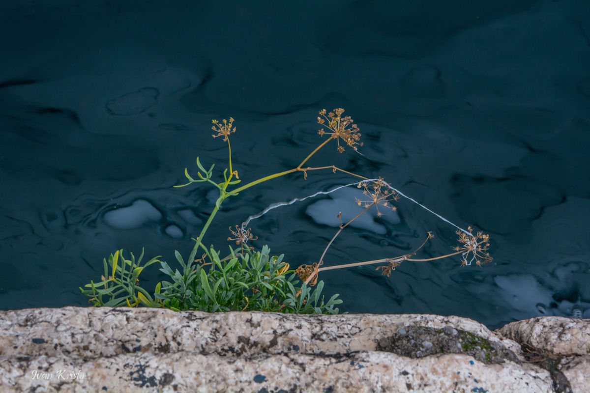 Stein,Pflanze,Meer und ...