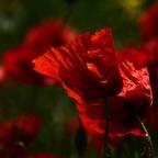 Rot und Rot und Rot und nochmals Rot...
