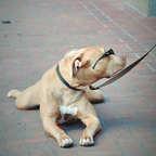 So ein cooler Hund