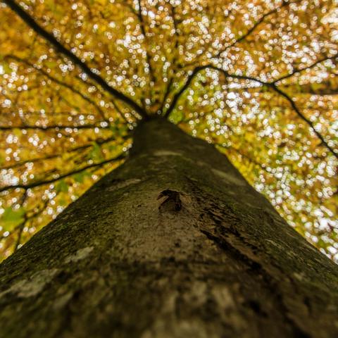 Herbstloch