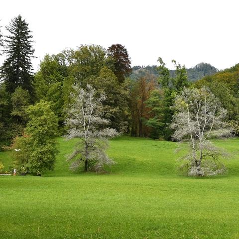 Die Farben der Bäume (Park der Kaiservilla)