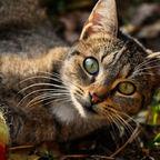 Neugierige Augen
