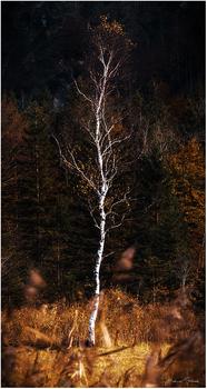 Autumn Fineart