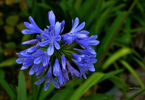 Schöne Blaue Farbe