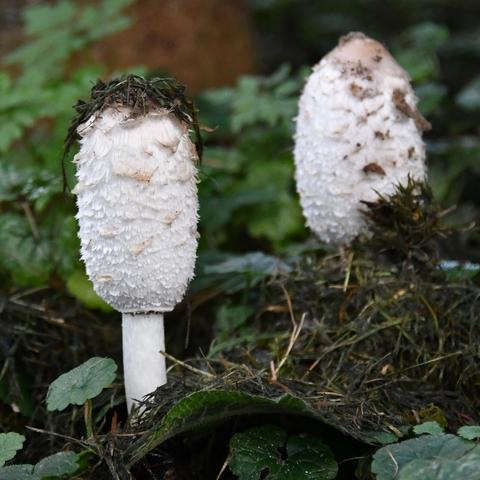 Zwei Männlein stehen im Walde :-)