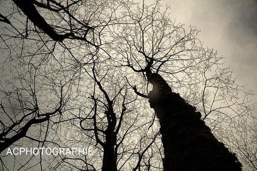 ACPHOTOGRAPHIE