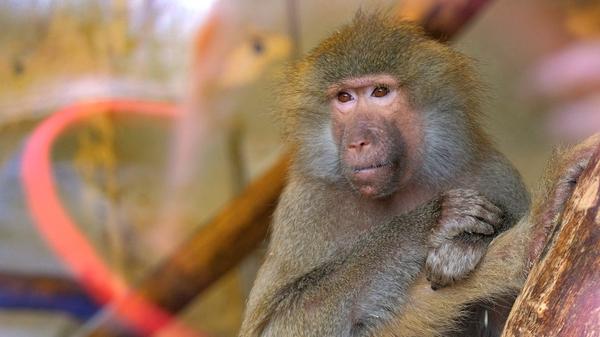 Fototour im Tierpark Haag
