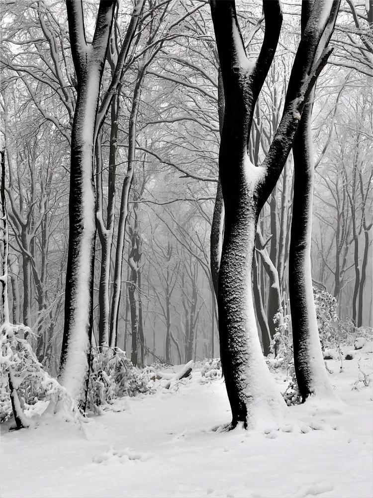 Winterwald-1