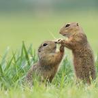 Liebe heißt teilen ...