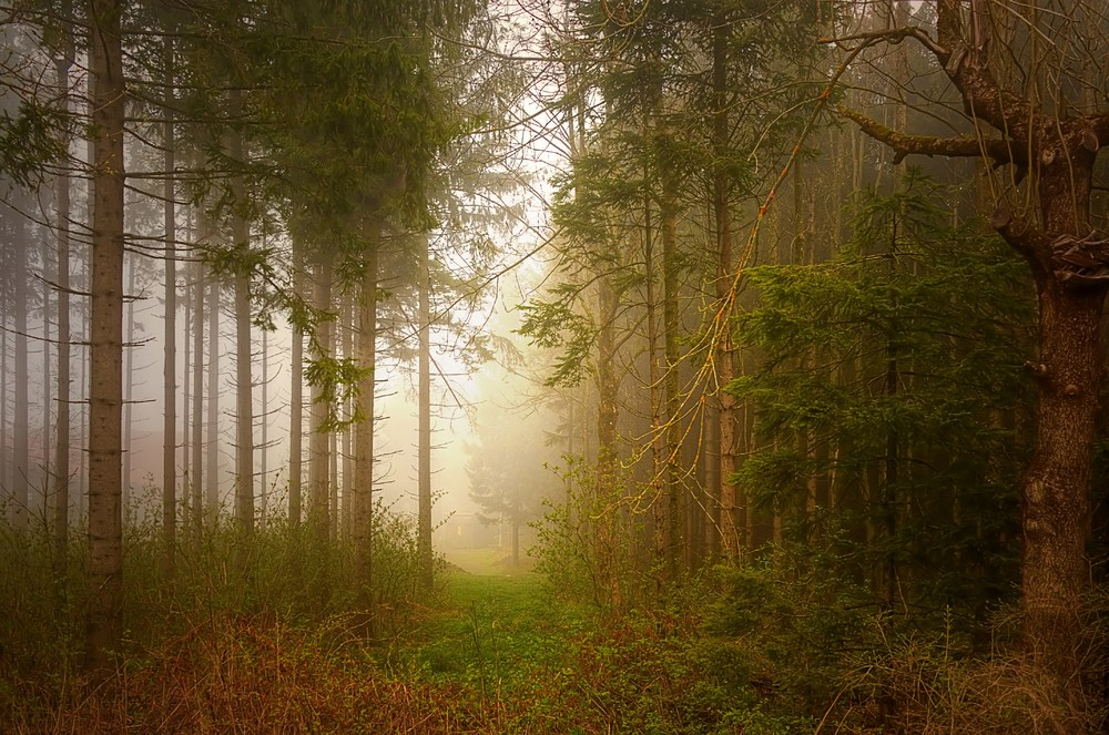 Im magischen Wald