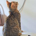 Mimi sieht fern