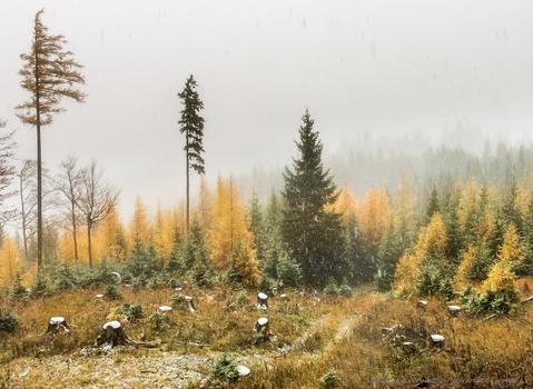 wenn der Winter wieder mal den Herbst einholt