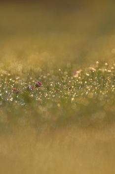 Gänseblümchen...