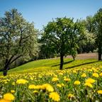Frühling in Pyhrafeld