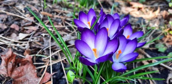 Frühling - ENDLICH...  ;-)