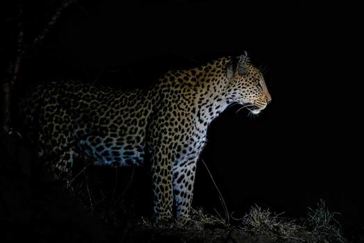 DSR04960-Edit Leopard