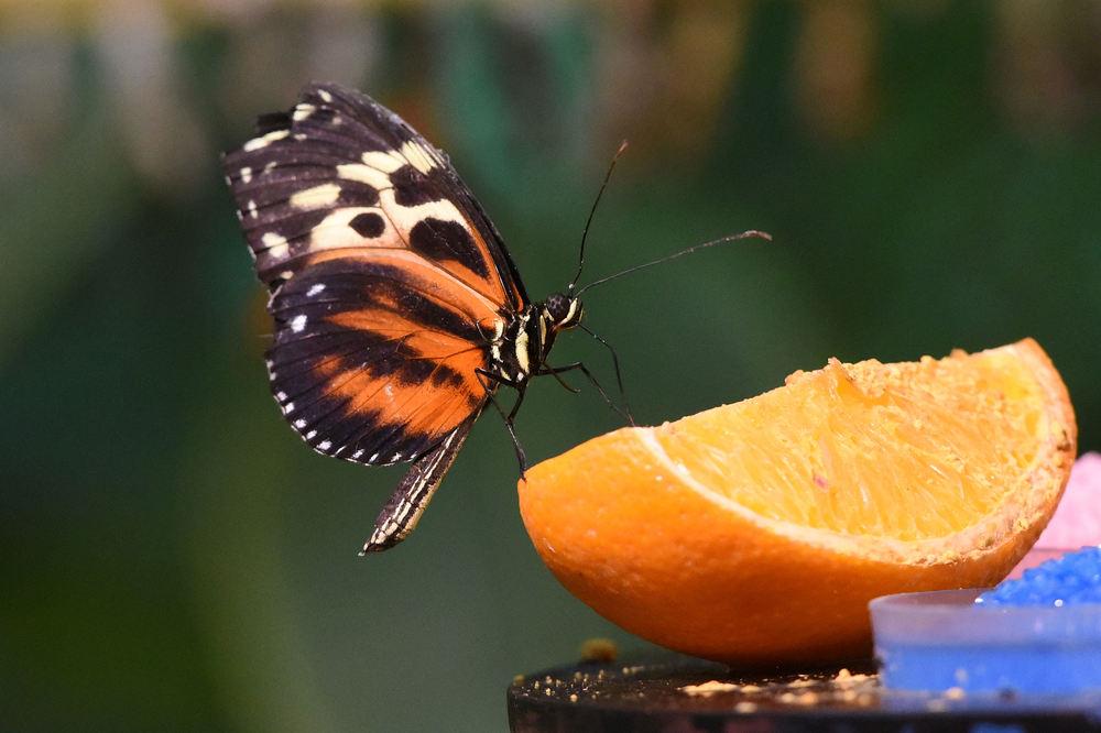 Orangen schmecken besser