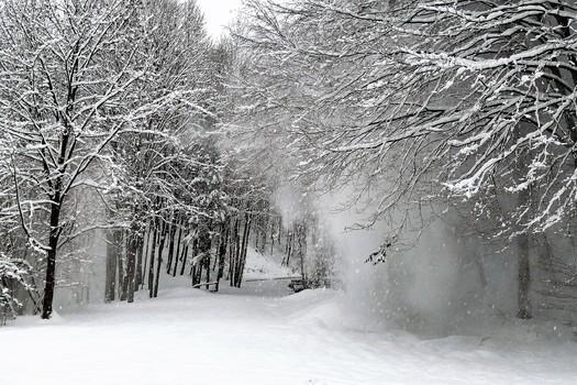 Sturm im Wald