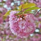 """""""Frühlings-Blütenkugel"""""""